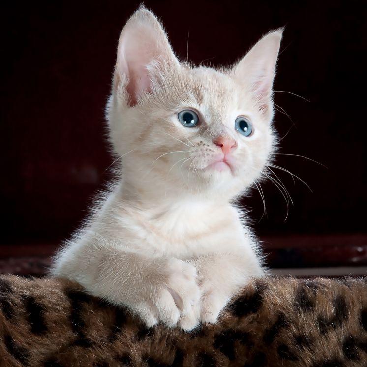 Your new kitten
